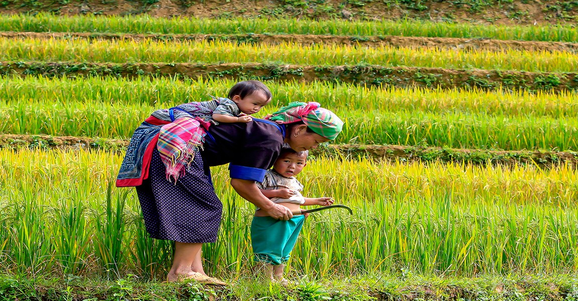 Families Cultivating Terraced Fields